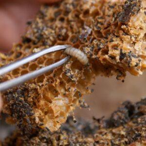 Средства от вредителей пчёл